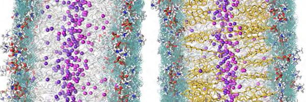 Voda bohatá na vodík snižuje hladinu LDL cholesterolu a zlepšuje funkci HDL